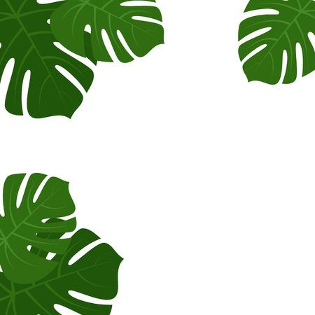 Tropical monstera green eaves frame isolated on white background. Vector illustration