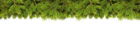 Weihnachtsbaumzweige auf Weiß Standard-Bild