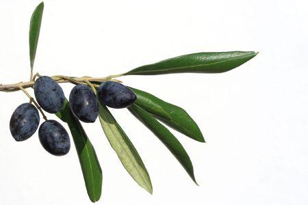 Oliven auf Branchen-Isolated on white Lizenzfreie Bilder