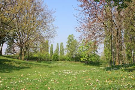 Summer landscape of young green forest with bright blue sky Stock Photo - 4867491