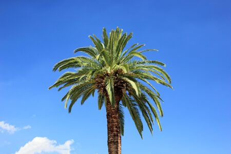 Palm tree against blue sky photo