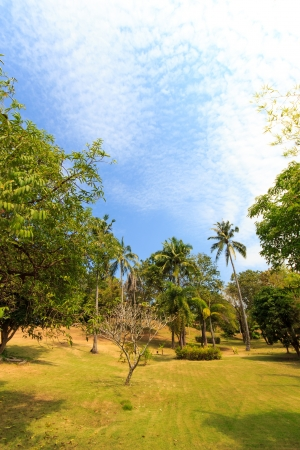beautiful tropical garden over blue sky. exotic trees and plants photo