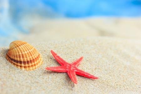 Sea shells on the sand on the beach photo