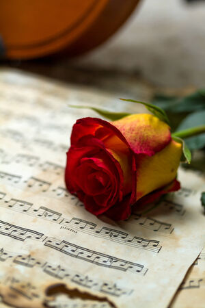 Violin sheet music and rose black composition still life music Stock Photo