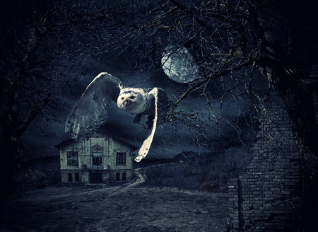 Dark and scary Haunted Mansion with owl in flight at full moon photo