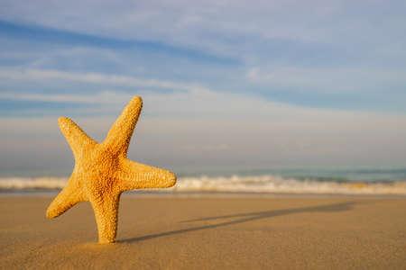 Starfish on the tropical beach Standard-Bild