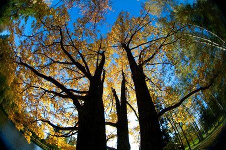 Autumn trees throw fisheye lens photo