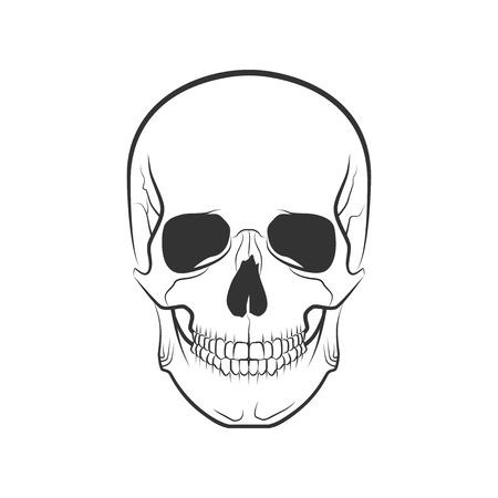 Human skull on isolated white background, excellent vector illustration Illustration