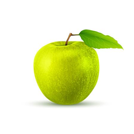 green apple isolated: Green apple, isolated on white background. excellent vector illustration  Illustration