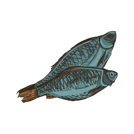marinelife: Doodle Sketchy fish isolated on the white background, excellent vector illustration Illustration