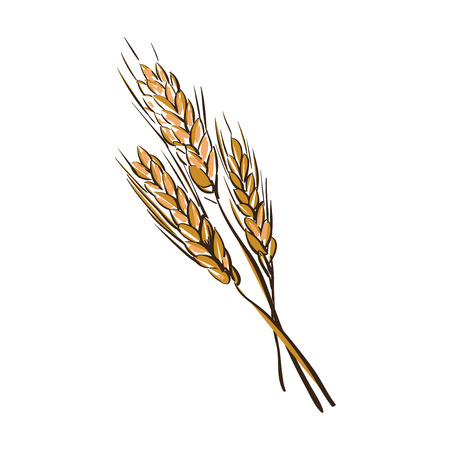 husk: doodle wheat spikelets isolated on a White Background