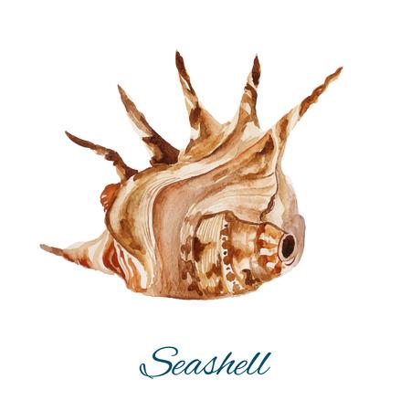 海シェルから独立、白い背景の水彩画