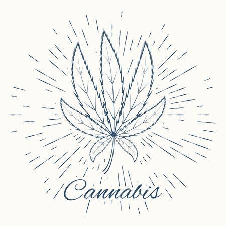 cannabis and vintage sun burst frame concept design excellent vector illustration eps 10