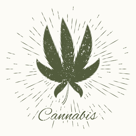 indica: cannabis and vintage sun burst frame. Concept design, excellent vector illustration, EPS 10