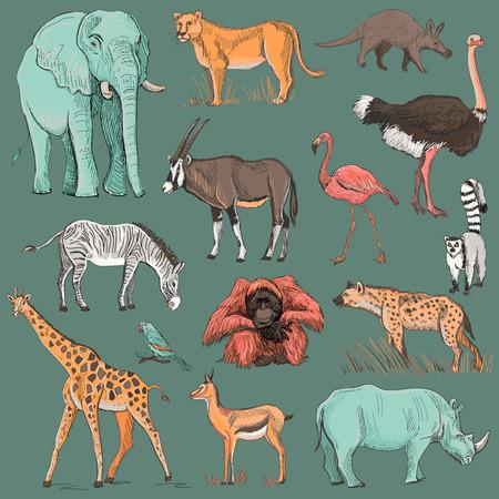 Hand drawn animal planet illustration such as elephant, giraffe, lioness, hyena, orangutan, parrot, rhino, zebra, deer, lemur, ostrich, anteater, flamingo