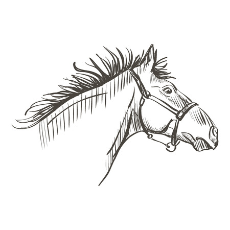 lowbrow: illustration of doodle horse on a white background Illustration