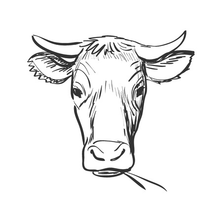 vaca caricatura: vaca garabato, dibujo Vaca cráneo. Aislado en el fondo blanco. Excelente ilustración vectorial, EPS 10