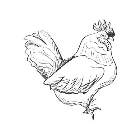 doodle bantam isolated in white background. Excellent vector illustration, EPS 10 Illustration