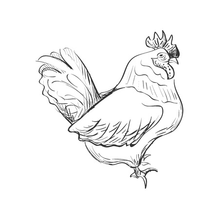 gallic: doodle bantam isolated in white background. Excellent vector illustration, EPS 10 Illustration