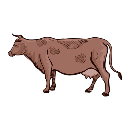 bull pen: Doodle cow. Isolated in white background. Excellent vector illustration, EPS 10