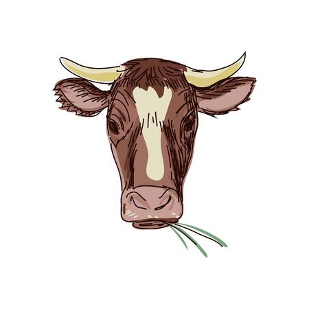 calavera caricatura: vaca garabato, dibujo Vaca cr�neo. Aislado en el fondo blanco. Excelente ilustraci�n vectorial, EPS 10
