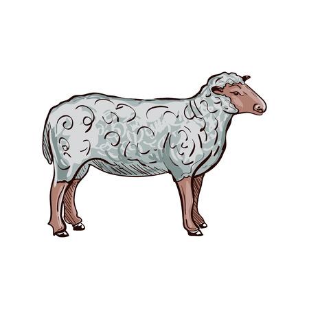 oveja negra: Doodle Ovejas incompleto. Ilustraci�n del vector. Aislado en el fondo blanco. Vectores