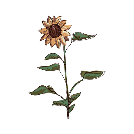 side border: Doodle sunflower. Doodle style. Isolated in white background. Excellent vector illustration, EPS 10