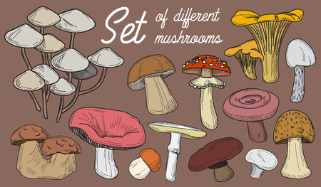 cep: Mushrooms set. Vector illustration of different types of mushrooms. Cep and boletus luteus. Saffron milk cap and death cap, morel and gyromitra, armillaria. Chanterelle and champignon.