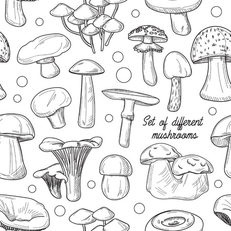 cep: Pattern of different mushrooms. Vector illustration. Cep and boletus luteus. Saffron milk cap and death cap, morel and gyromitra, armillaria. Chanterelle and champignon.