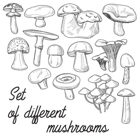 morel: Mushrooms set. Vector illustration of different types of mushrooms. Cep and boletus luteus. Saffron milk cap and death cap, morel and gyromitra, armillaria. Chanterelle and champignon.
