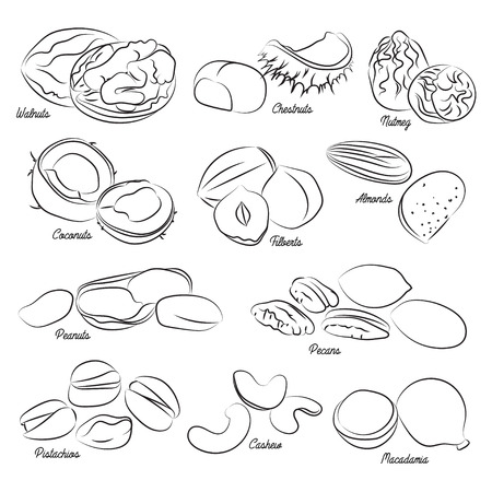 walnut: Collection of different nuts vector flat illustration. Healthy nutrition and vitamin concept. Heaps of different nuts, walnuts, cashews, almonds and others isolated on white background Illustration