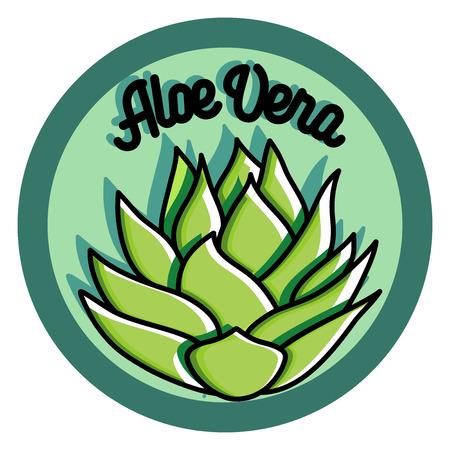 vera: Color vintage Aloe vera emblem with special design. Vector illustration