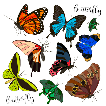 Big collection of colorful butterflies. Vector illustration, EPS 10 Illustration