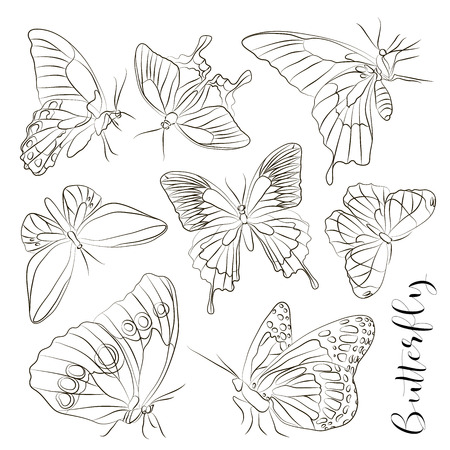 Big collection of butterflies. Vector illustration