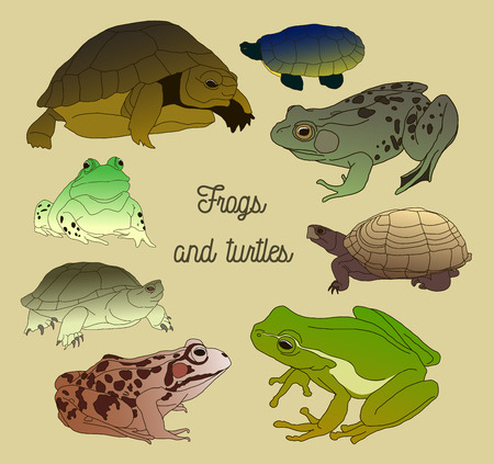 Set with frogs and turtles