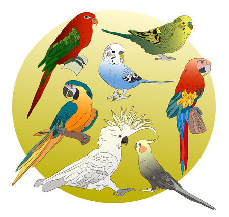 Different Parrots set. Tropical parrots feather zoo birds, tropical fauna macaw flying ara. Various exotic birds set with parrots vector illustration.