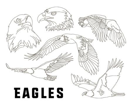 eagle flying: Set of eagles. Flying eagle. Vector illustration Illustration