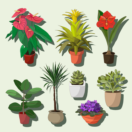 houseplant: Set of green house plants in pots. Leaf and flowers. Flowerpot isolated objects, houseplant collection. Vector illustration Illustration