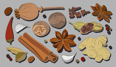 Spices, condiments and herbs decorative elements. Vector illustration