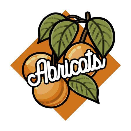 Color vintage fruits emblem Apricots, label, badge and design elements. Vector illustration, EPS 10