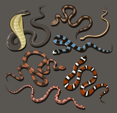 boas: Hand drawn Snake set Illustration