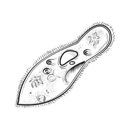 Microbiology Infusoria icon Illustration
