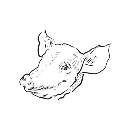 Sketch pig icon