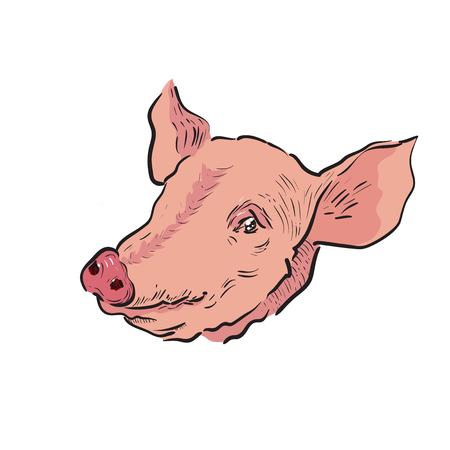 Color Sketch pig