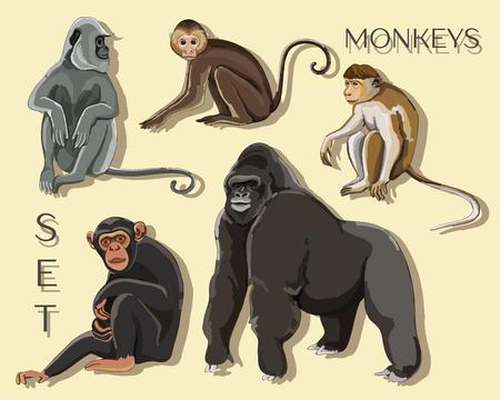 Different types of monkeys Vettoriali