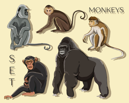 Different types of monkeys Stock Illustratie