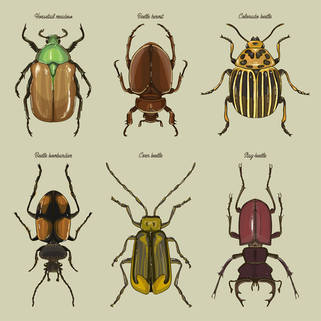 Set of beetle illustrations Çizim