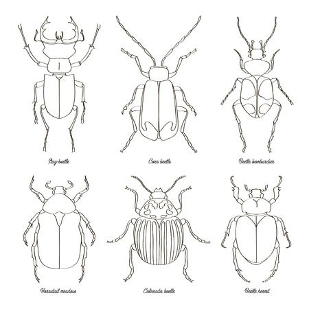 Set of beetle illustrations Illustration