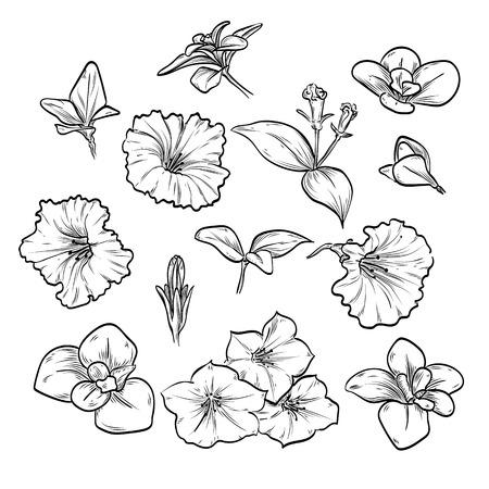 Hand drawn elegant petunya