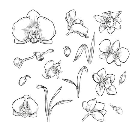 Vector hand drawn elegant orchid Vectores